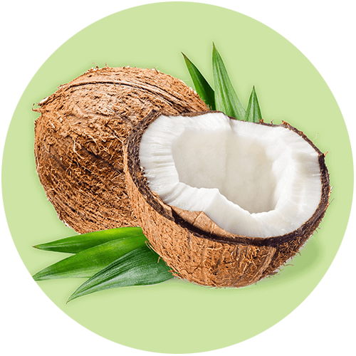 Cocos Nucifera Fruit Oil